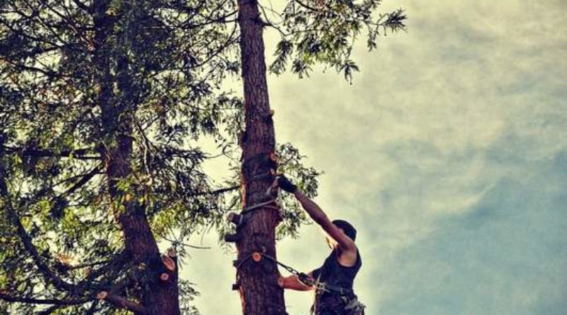 Step by Step Guide for Tree Removal Central Coast